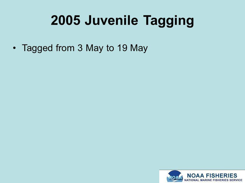 2005 Juvenile Tagging Tagged from 3 May to 19 May