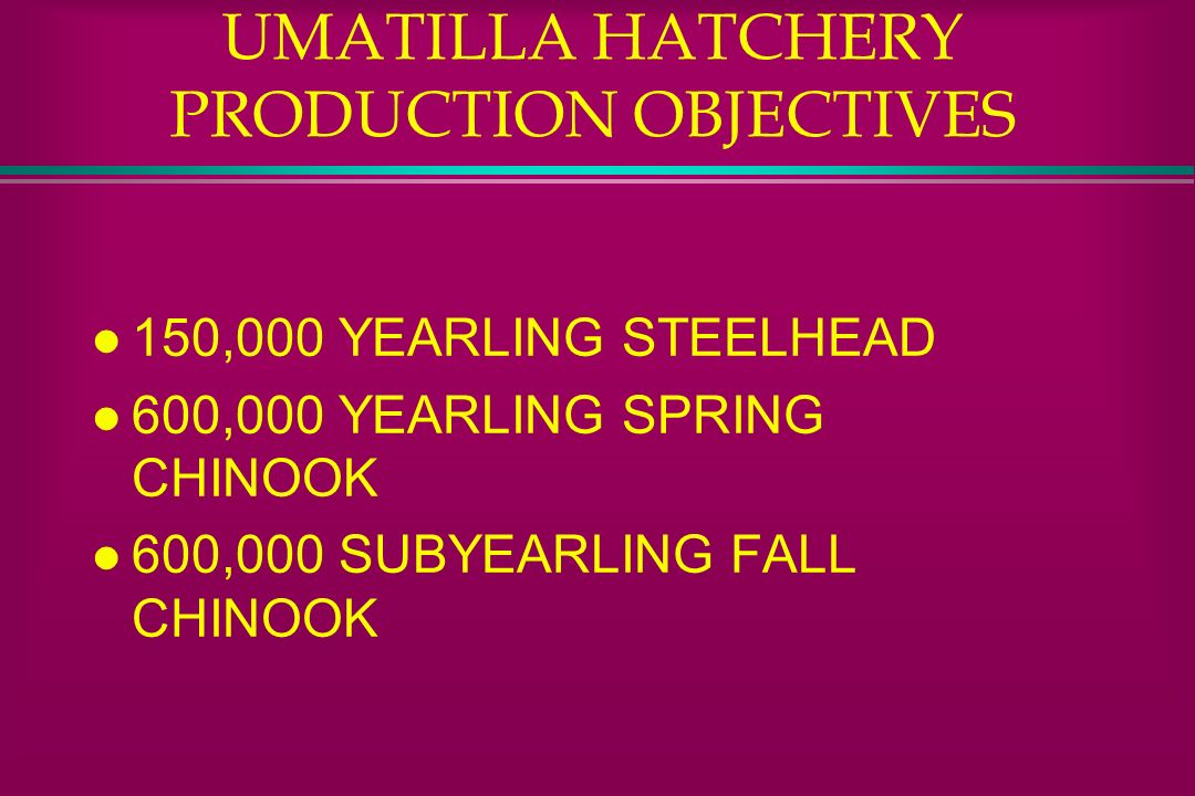 LITTLE WHITE HATCHERY PRODUCTION OBJECTIVES l 210,000 YEARLING SPRING CHINOOK