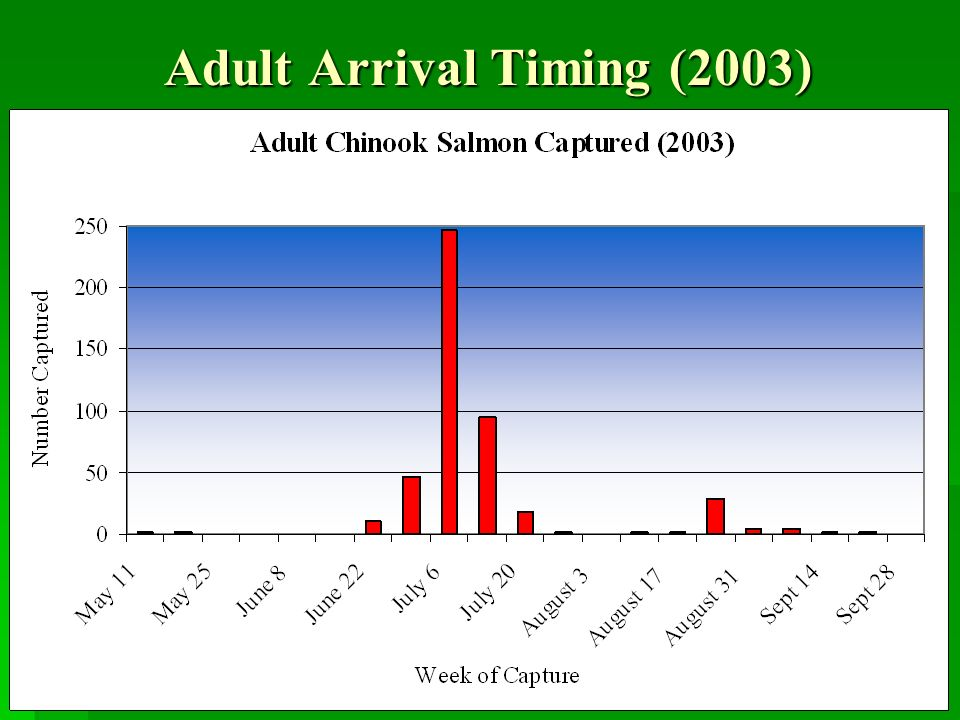 Adult Arrival Timing (2003)