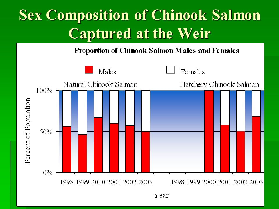 Sex Composition of Chinook Salmon Captured at the Weir