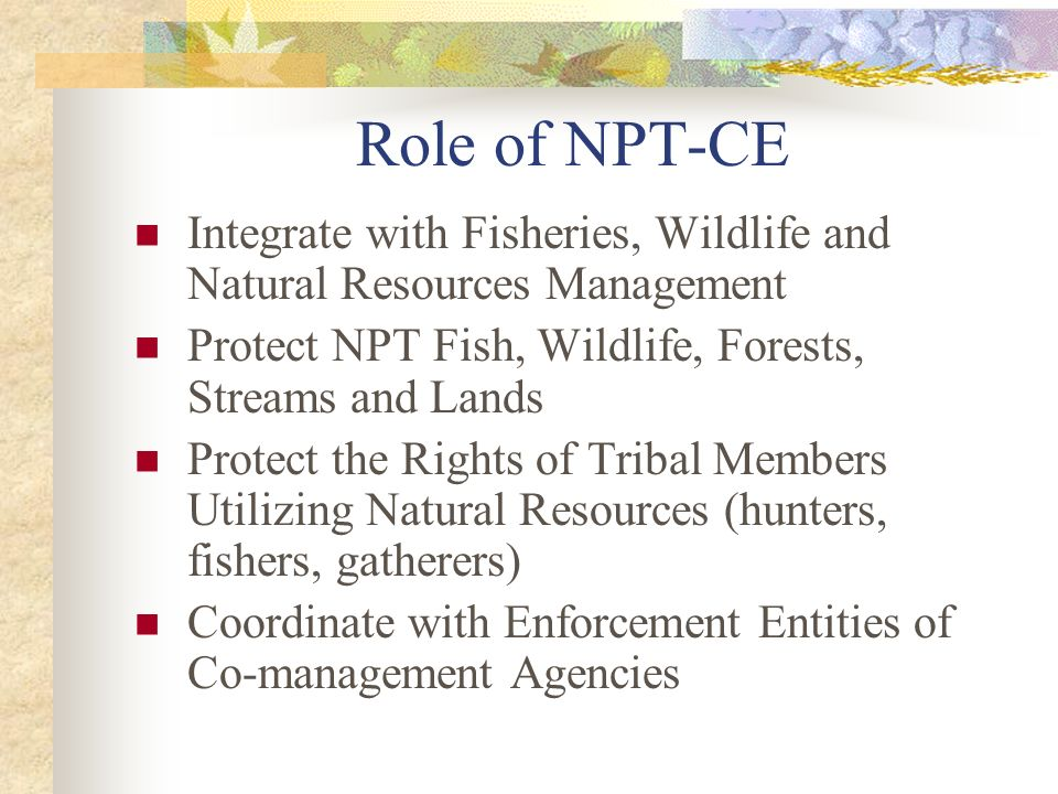 Role of NPT-CE Integrate with Fisheries, Wildlife and Natural Resources Management Protect NPT Fish, Wildlife, Forests, Streams and Lands Protect the Rights of Tribal Members Utilizing Natural Resources (hunters, fishers, gatherers) Coordinate with Enforcement Entities of Co-management Agencies