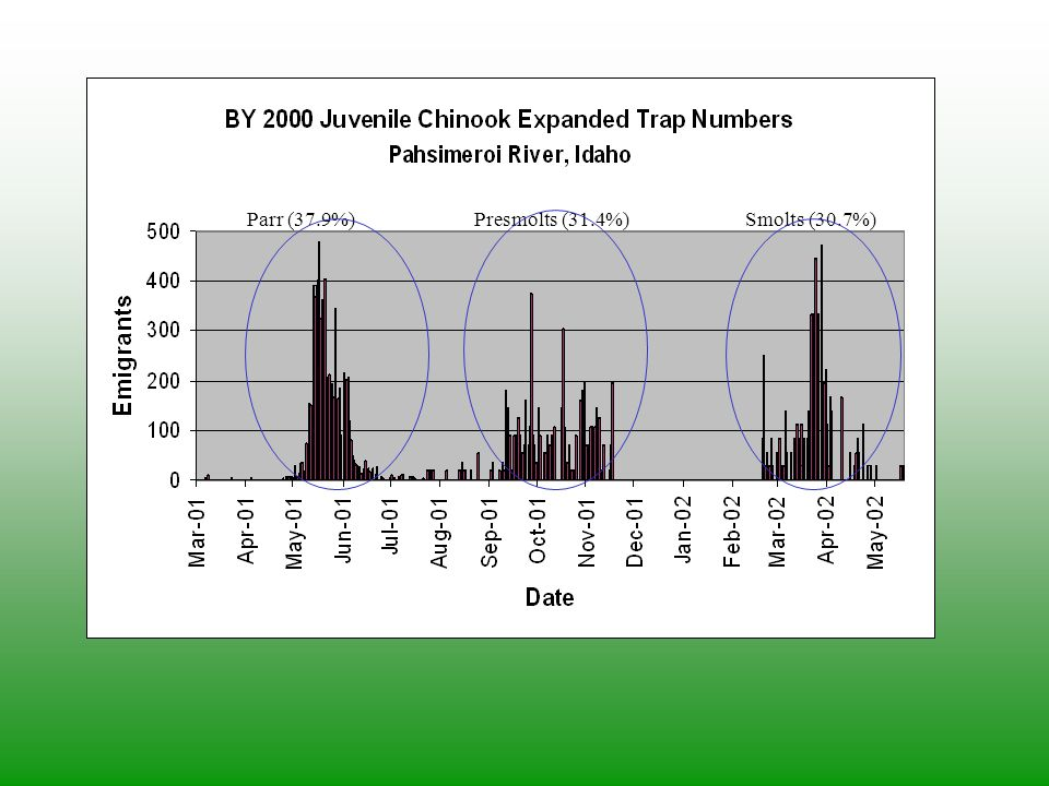 Parr (37.9%)Presmolts (31.4%)Smolts (30.7%)