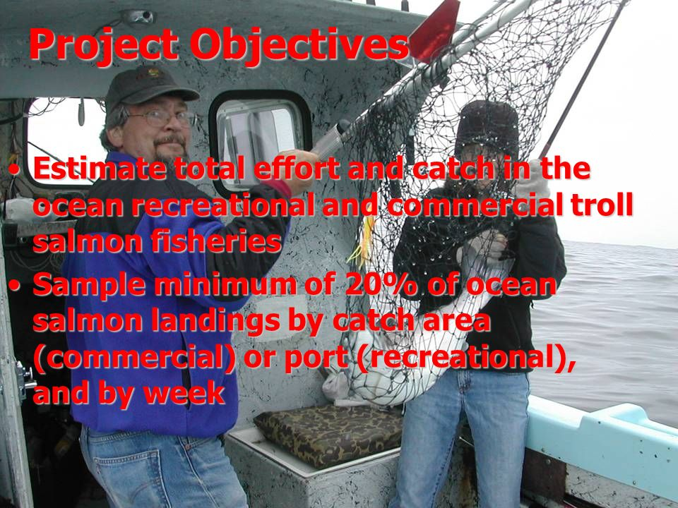 Project Objectives Estimate total effort and catch in the ocean recreational and commercial troll salmon fisheries Sample minimum of 20% of ocean salmon landings by catch area (commercial) or port (recreational), and by week