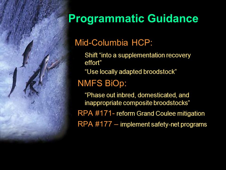 Programmatic Guidance Mid-Columbia HCP: Shift into a supplementation recovery effort Use locally adapted broodstock NMFS BiOp: Phase out inbred, domesticated, and inappropriate composite broodstocks RPA #171- reform Grand Coulee mitigation RPA #177 – implement safety-net programs.