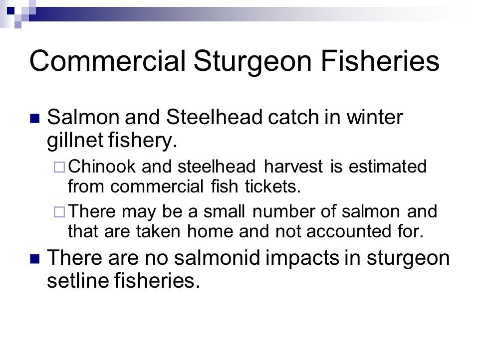 Commercial Sturgeon Fisheries Salmon and Steelhead catch in winter gillnet fishery.