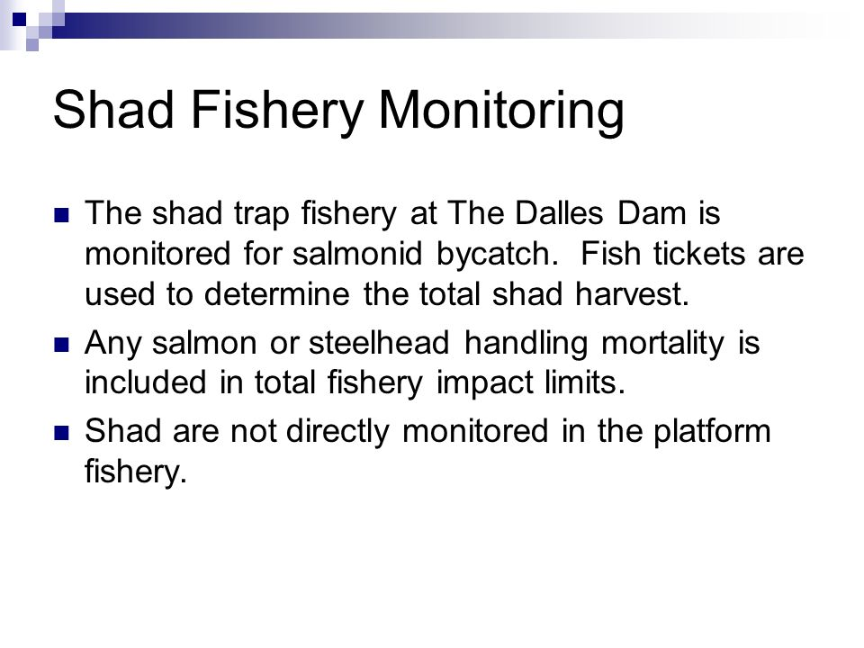 Shad Fishery Monitoring The shad trap fishery at The Dalles Dam is monitored for salmonid bycatch. Fish tickets are used to determine the total shad h