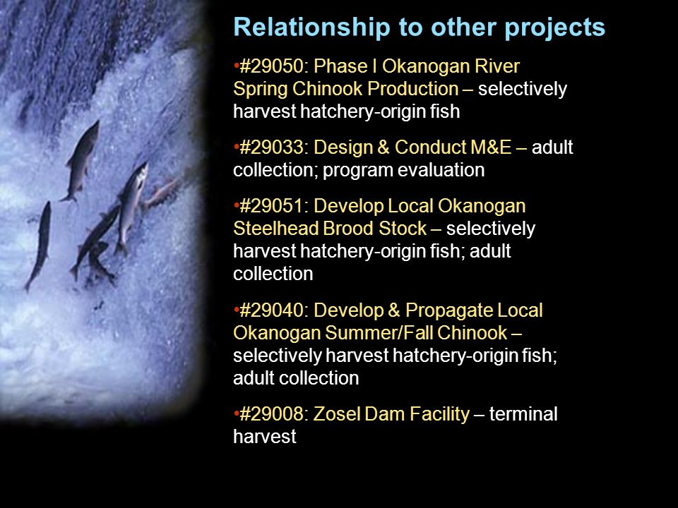 Relationship to other projects #29050: Phase I Okanogan River Spring Chinook Production – selectively harvest hatchery-origin fish #29033: Design & Conduct M&E – adult collection; program evaluation #29051: Develop Local Okanogan Steelhead Brood Stock – selectively harvest hatchery-origin fish; adult collection #29040: Develop & Propagate Local Okanogan Summer/Fall Chinook – selectively harvest hatchery-origin fish; adult collection #29008: Zosel Dam Facility – terminal harvest