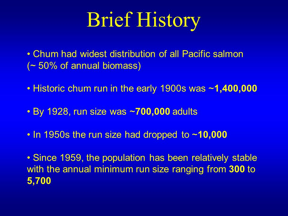 Chum had widest distribution of all Pacific salmon (~ 50% of annual biomass) Historic chum run in the early 1900s was ~1,400,000 By 1928, run size was