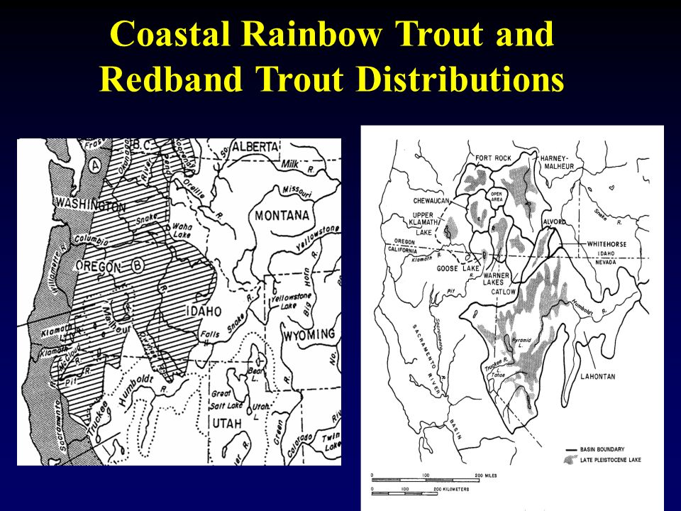 Coastal Rainbow Trout and Redband Trout Distributions