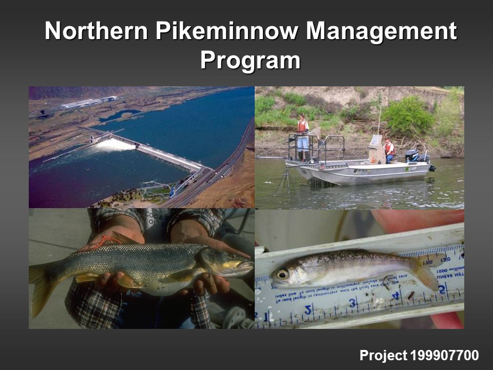 Northern Pikeminnow Management Program Project 199907700