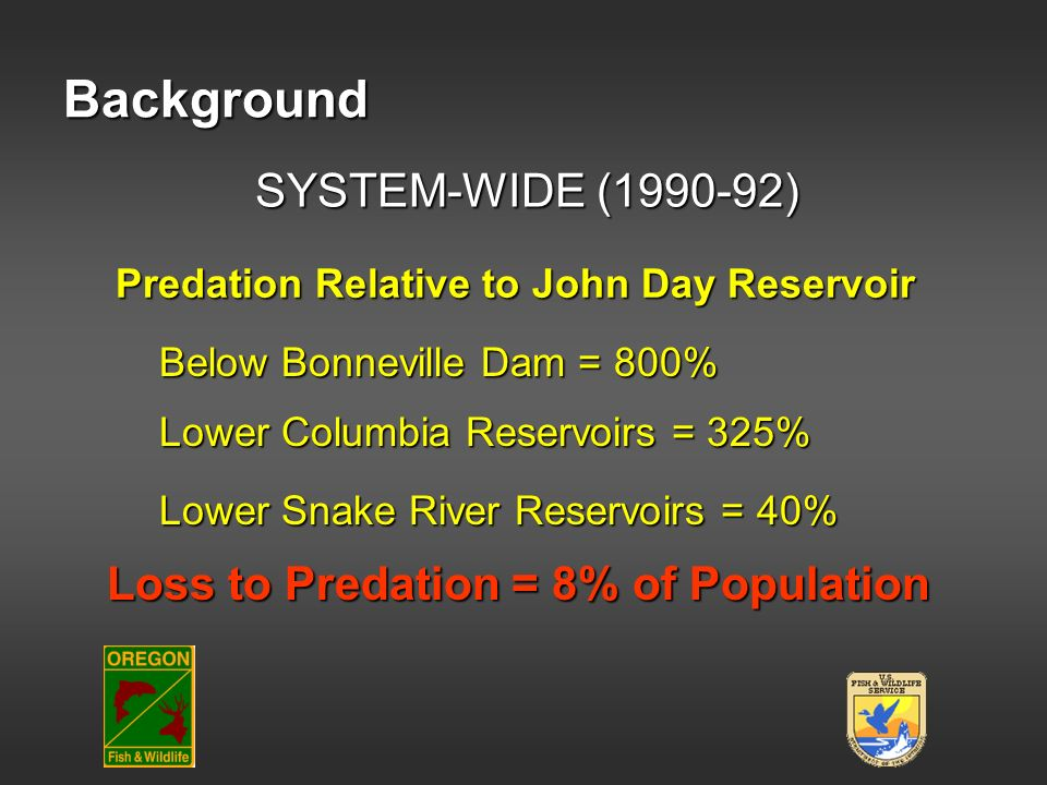 Background Lower Columbia Reservoirs = 325% Predation Relative to John Day Reservoir Lower Snake River Reservoirs = 40% Below Bonneville Dam = 800% Lo