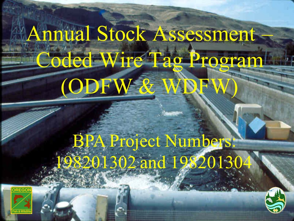Annual Stock Assessment – Coded Wire Tag Program (ODFW & WDFW) BPA Project Numbers: 198201302 and 198201304