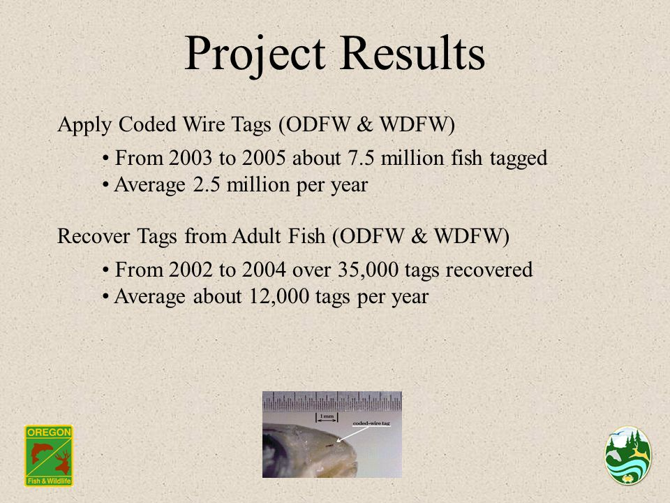 Project Results Apply Coded Wire Tags (ODFW & WDFW) From 2003 to 2005 about 7.5 million fish tagged Average 2.5 million per year Recover Tags from Adult Fish (ODFW & WDFW) From 2002 to 2004 over 35,000 tags recovered Average about 12,000 tags per year