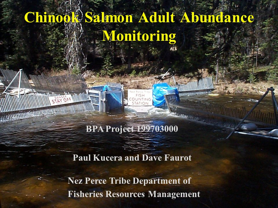 Chinook Salmon Adult Abundance Monitoring Paul Kucera and Dave Faurot Nez Perce Tribe Department of Fisheries Resources Management BPA Project 199703000