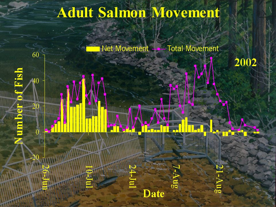 Adult Salmon Movement
