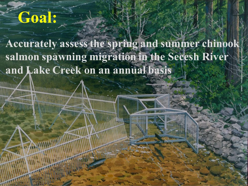 Goal: Accurately assess the spring and summer chinook salmon spawning migration in the Secesh River and Lake Creek on an annual basis