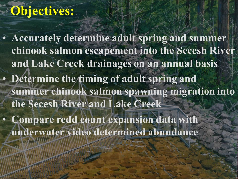 Objectives: Accurately determine adult spring and summer chinook salmon escapement into the Secesh River and Lake Creek drainages on an annual basis Determine the timing of adult spring and summer chinook salmon spawning migration into the Secesh River and Lake Creek Compare redd count expansion data with underwater video determined abundance