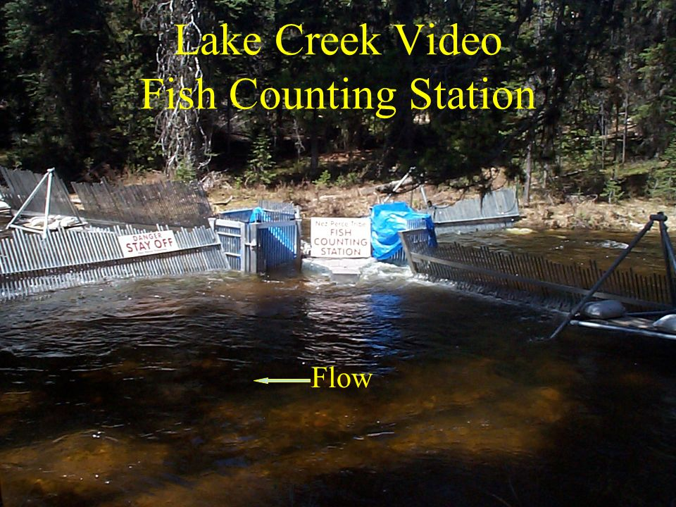 Lake Creek Video Fish Counting Station Flow