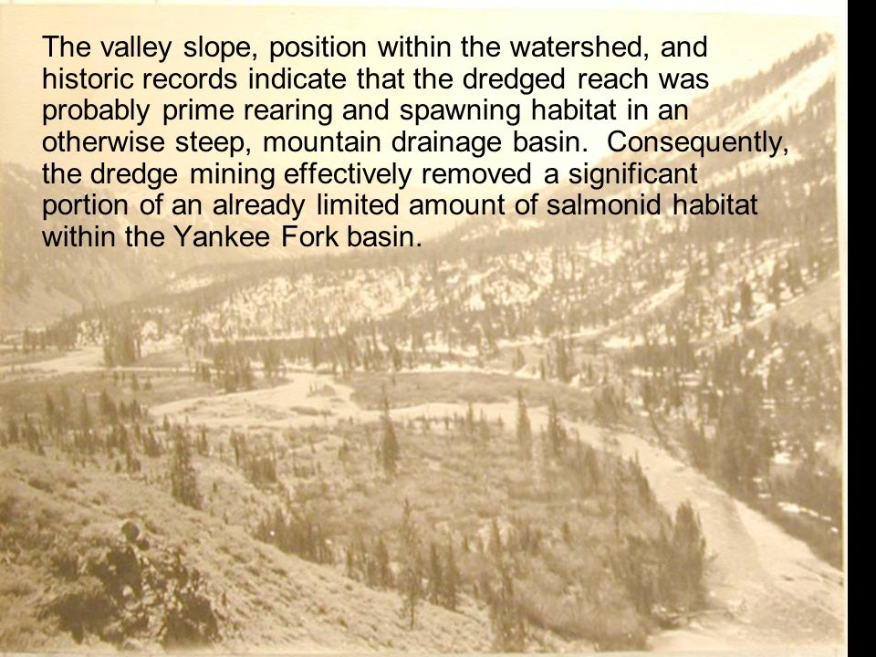 The valley slope, position within the watershed, and historic records indicate that the dredged reach was probably prime rearing and spawning habitat in an otherwise steep, mountain drainage basin.