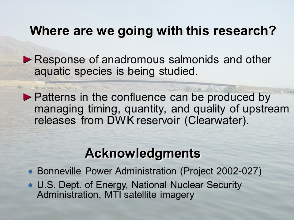 18 Where are we going with this research? Response of anadromous salmonids and other aquatic species is being studied. Patterns in the confluence can