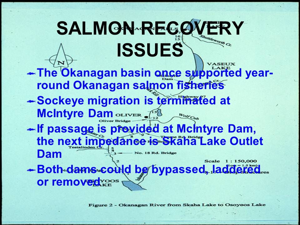 SALMON RECOVERY ISSUES The Okanagan basin once supported year- round Okanagan salmon fisheries Sockeye migration is terminated at McIntyre Dam If passage is provided at McIntyre Dam, the next impedance is Skaha Lake Outlet Dam Both dams could be bypassed, laddered or removed