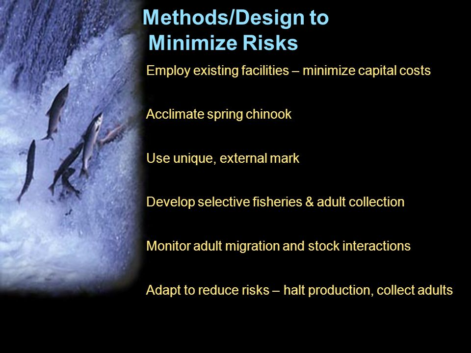 Methods/Design to Minimize Risks Employ existing facilities – minimize capital costs Acclimate spring chinook Use unique, external mark Develop select