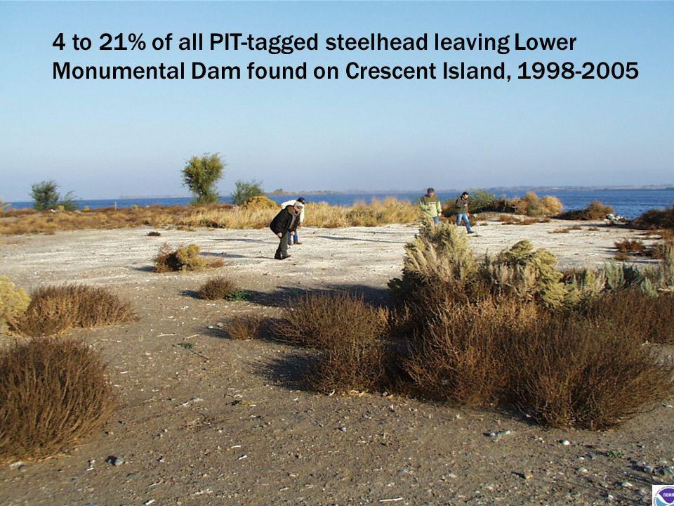 4 to 21% of all PIT-tagged steelhead leaving Lower Monumental Dam found on Crescent Island, 1998-2005