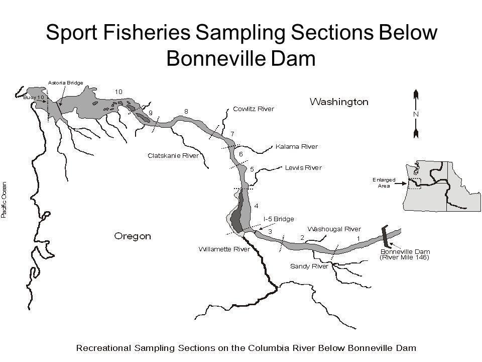 Sport Fisheries Sampling Sections Below Bonneville Dam