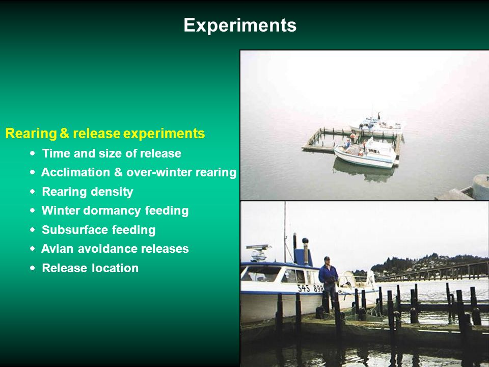 Experiments Rearing & release experiments Time and size of release Acclimation & over-winter rearing Rearing density Winter dormancy feeding Subsurfac
