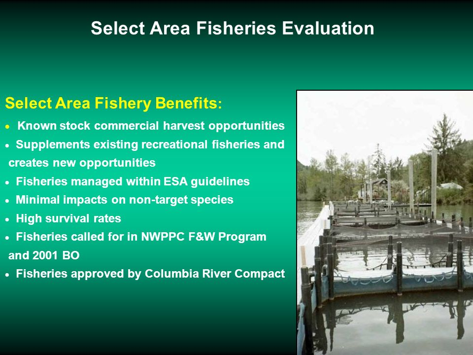 Select Area Fisheries Evaluation Select Area Fishery Benefits : Known stock commercial harvest opportunities Supplements existing recreational fisheri