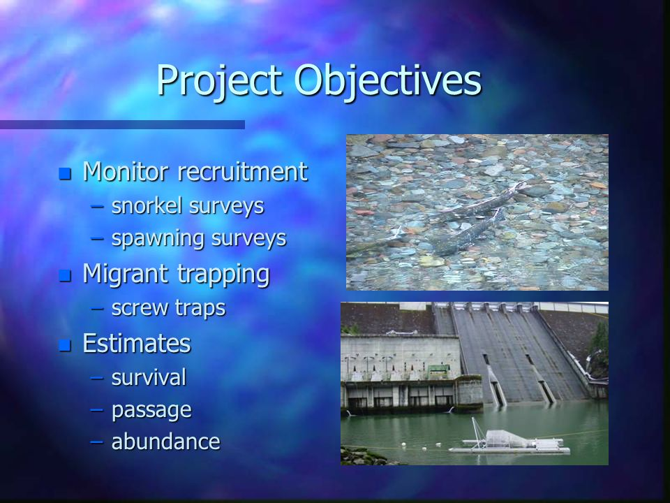 Project Objectives n Monitor recruitment –snorkel surveys –spawning surveys n Migrant trapping –screw traps n Estimates –survival –passage –abundance