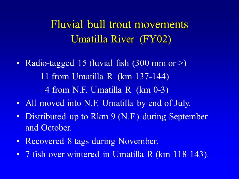 Fluvial bull trout movements Umatilla River (FY02) Radio-tagged 15 fluvial fish (300 mm or >) 11 from Umatilla R (km 137-144) 4 from N.F. Umatilla R (