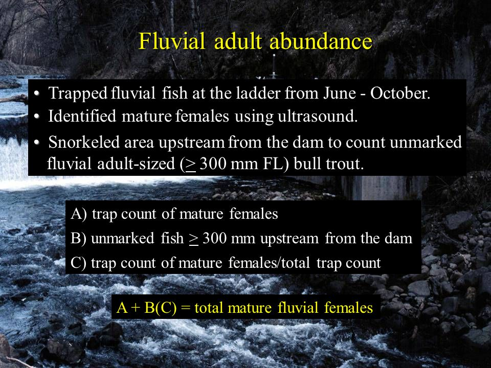 Fluvial adult abundance A + B(C) = total mature fluvial females A) trap count of mature females B) unmarked fish > 300 mm upstream from the dam C) tra