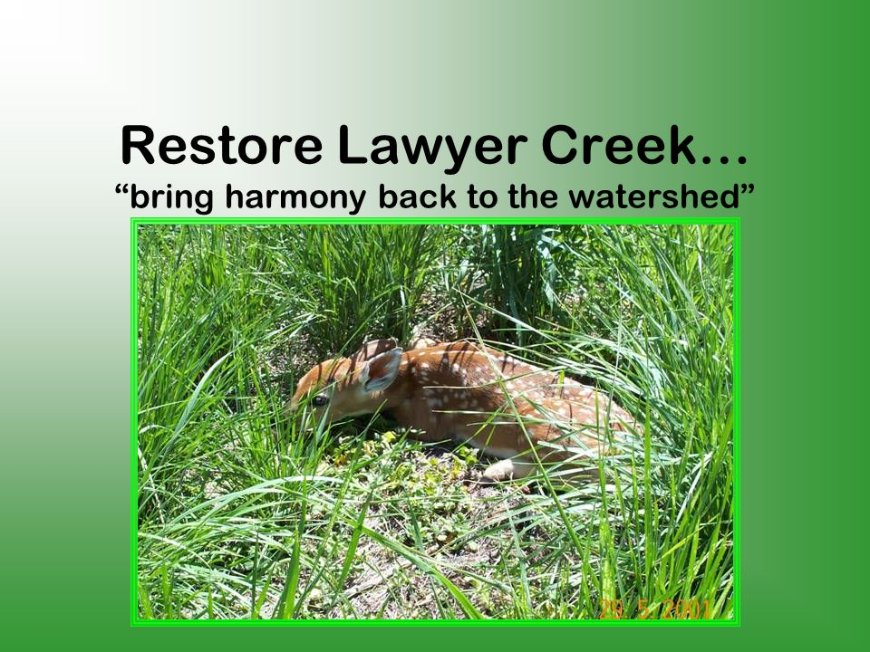 Restore Lawyer Creek… bring harmony back to the watershed