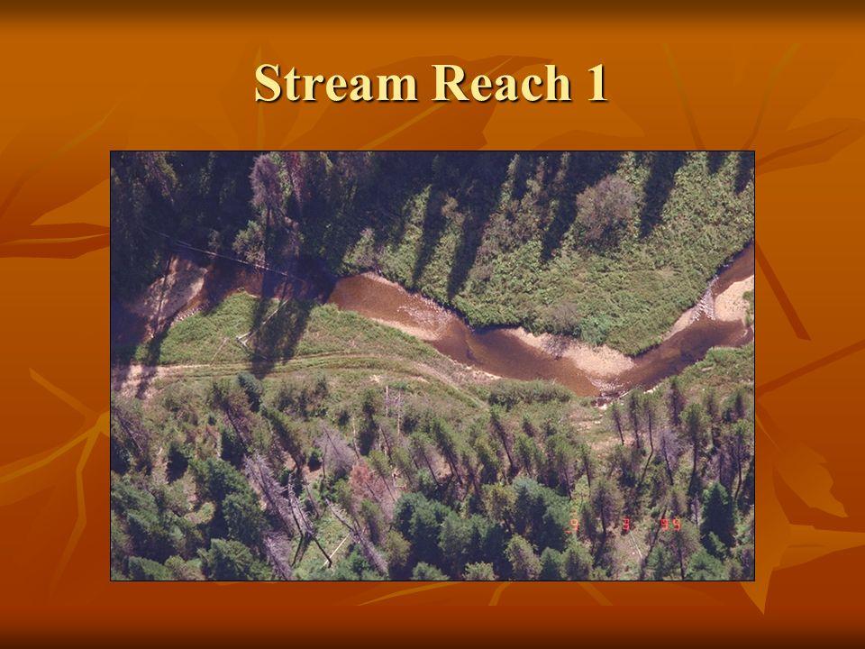 Stream Reach 1