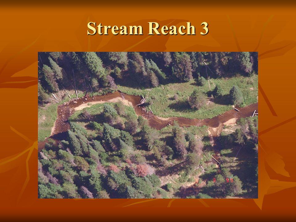 Stream Reach 3