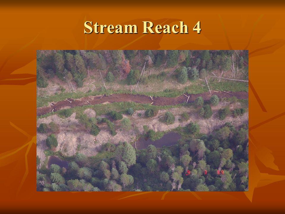 Stream Reach 4