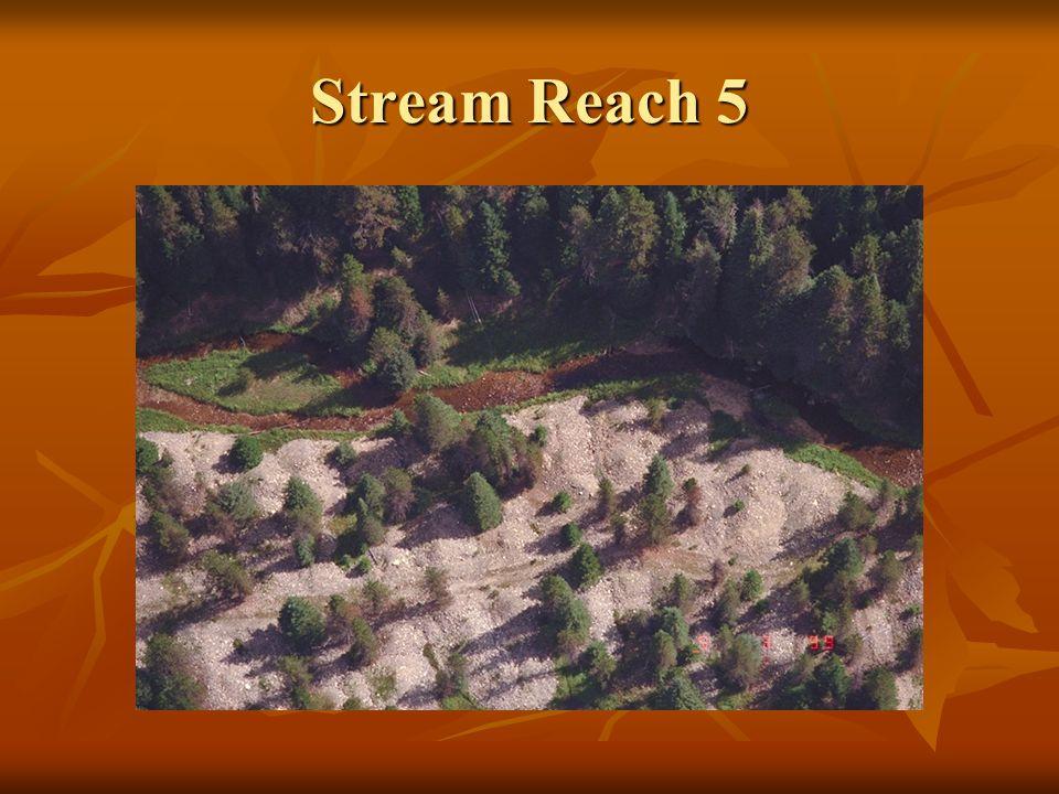 Stream Reach 5