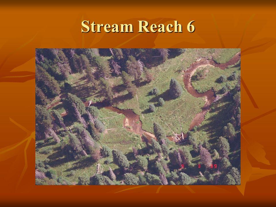 Stream Reach 6