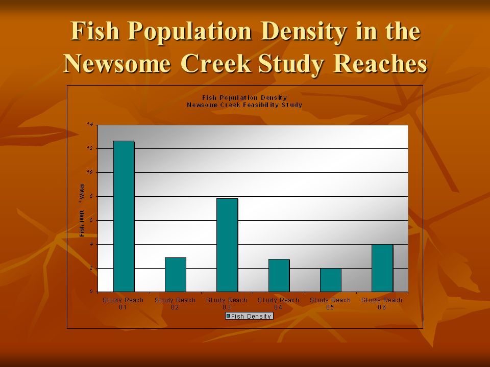 Fish Population Density in the Newsome Creek Study Reaches