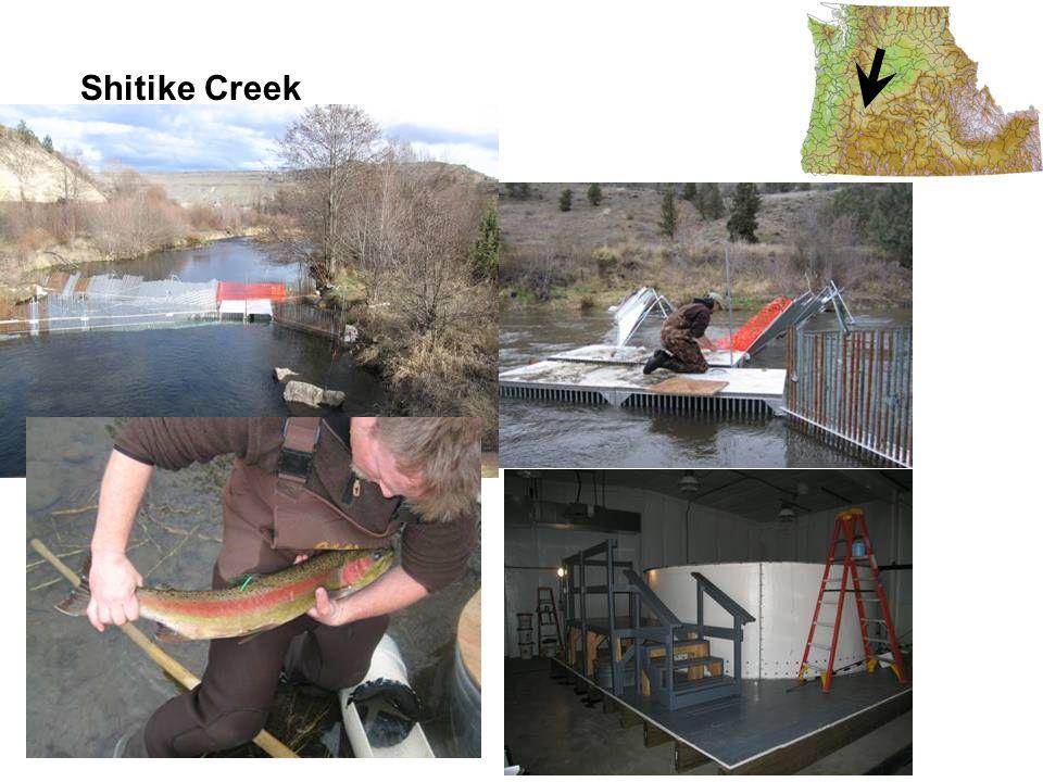 Shitike Creek