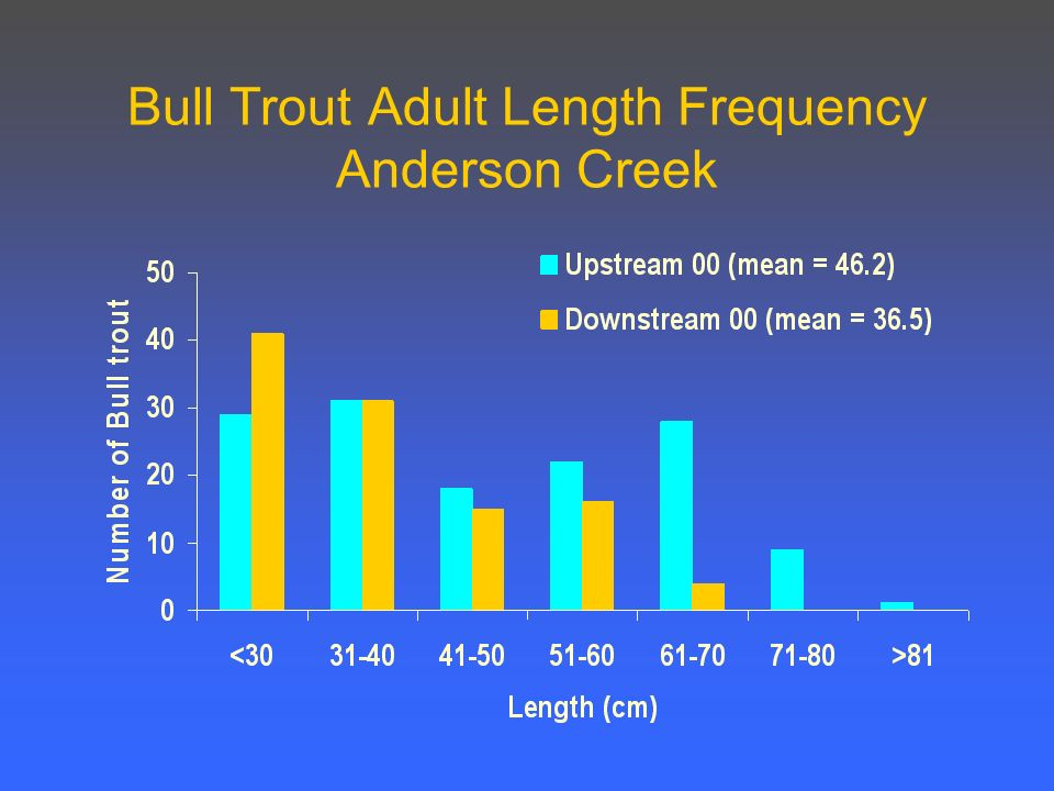 Bull Trout Adult Length Frequency Anderson Creek