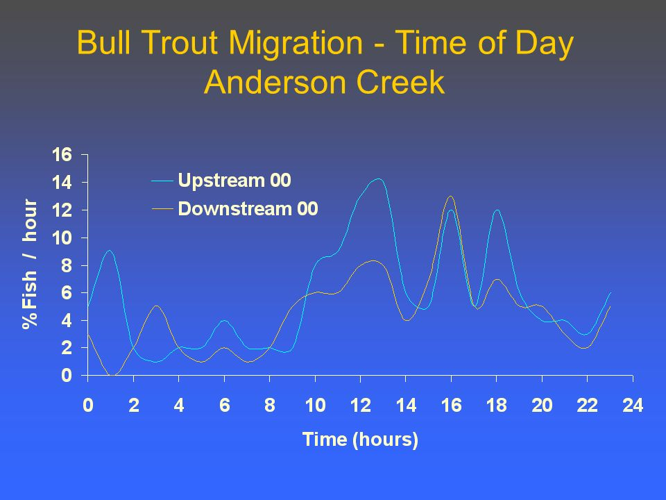 Bull Trout Migration - Time of Day Anderson Creek