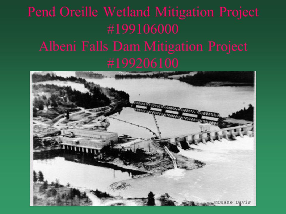 Pend Oreille Wetland Mitigation Project #199106000 Albeni Falls Dam Mitigation Project #199206100