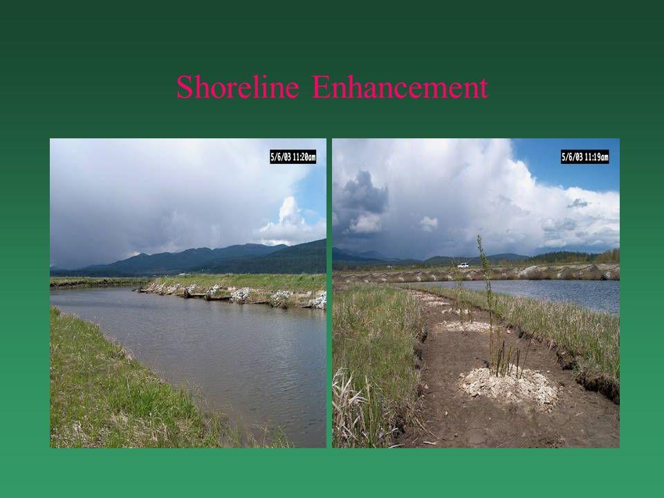 Shoreline Enhancement