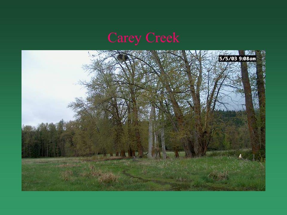 Carey Creek