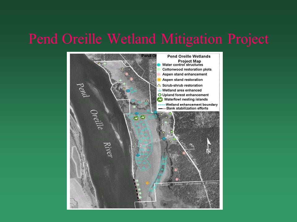 Management Strategies Restore Hydrology Restore/Enhance Vegetative Components Control Shoreline Erosion Control Noxious Weeds Control Vehicular Access