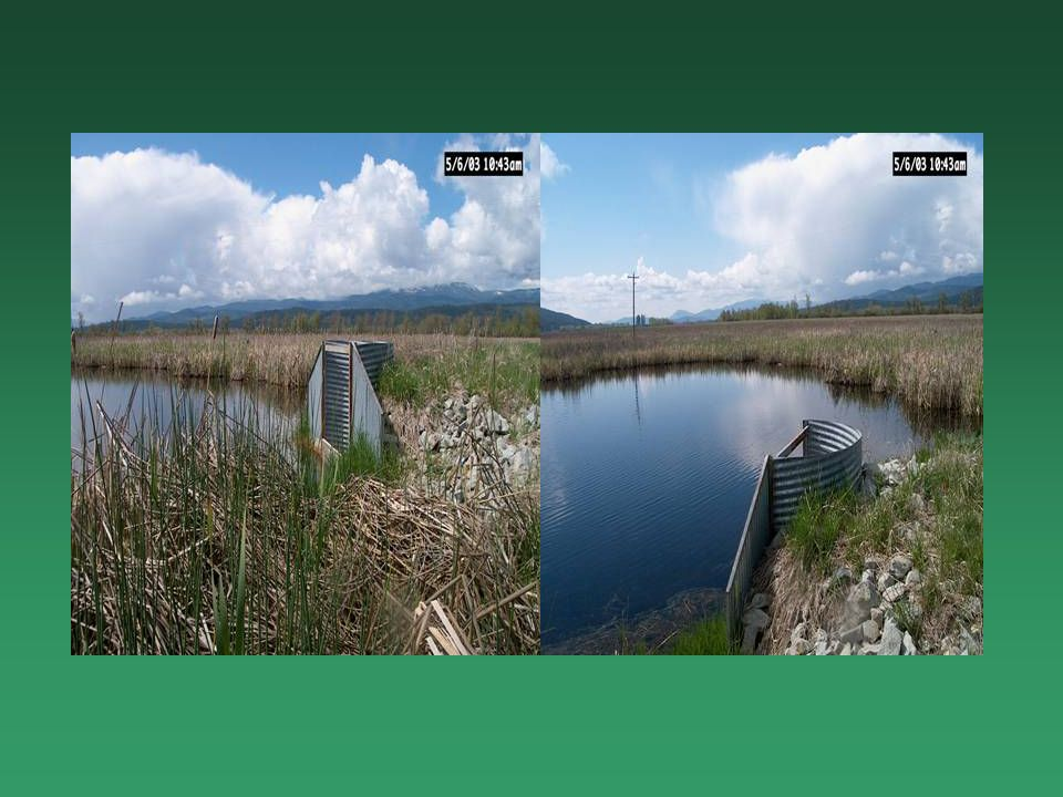 Techniques Removal of grazing Restore wetland hydrology and vegetation Stabilize shorelines Restore shrub and deciduous riparian components Noxious weed control Vehicular access control