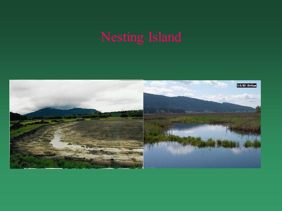 Nesting Island
