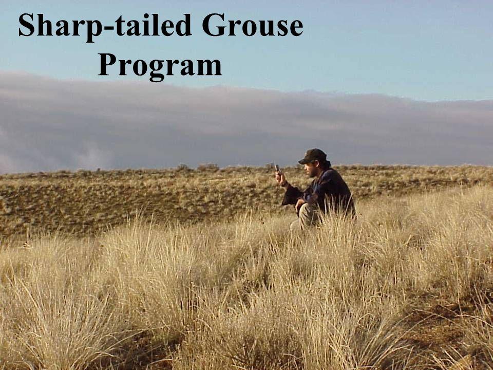 Sharp-tailed Grouse Program